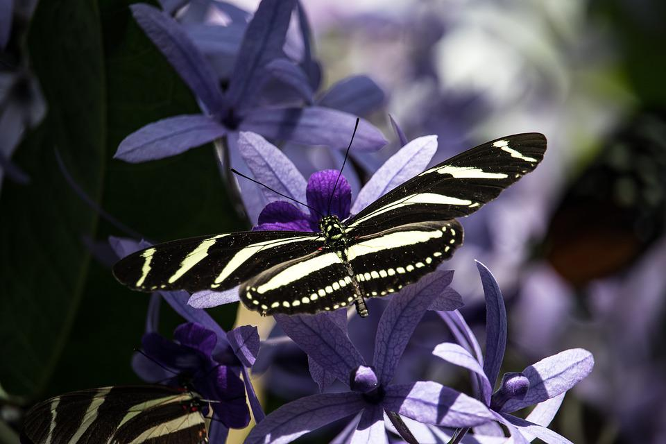 Butterfly, Insect, Animal, Animal World, Exotic