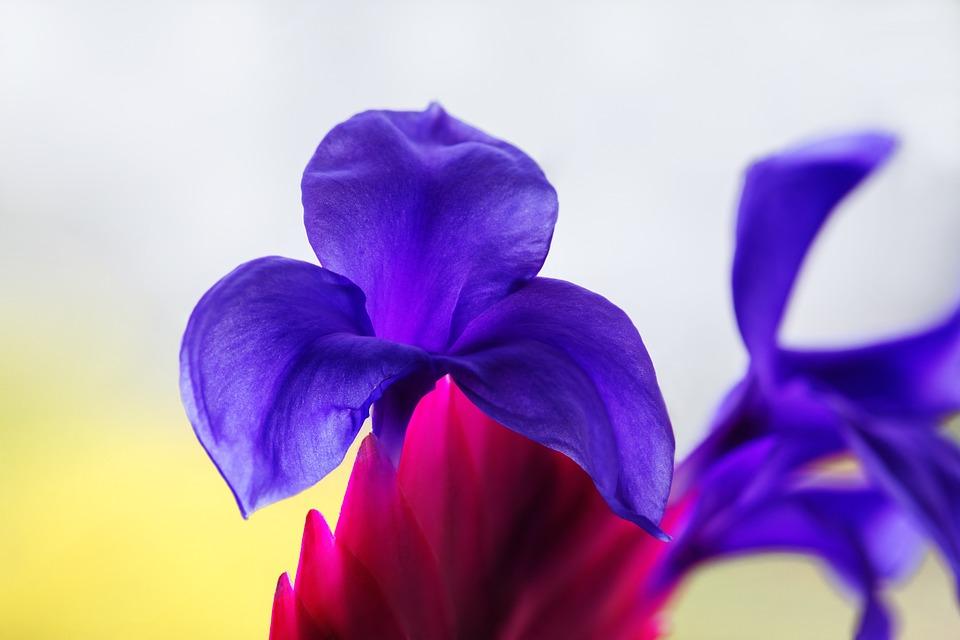 Bromeliad, Exotic, Flower, Plant, Flora, Blossom, Bloom