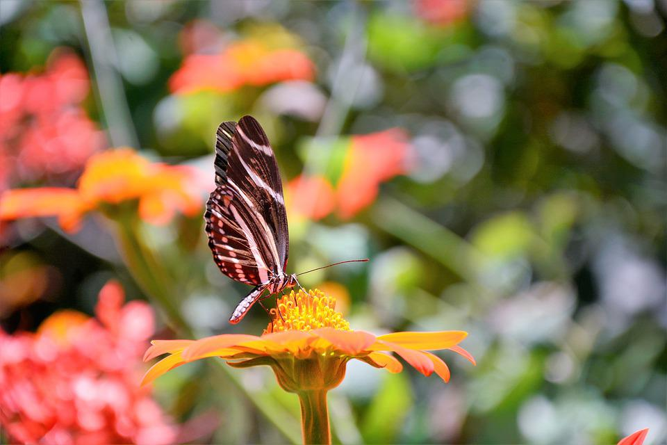 Butterfly, Tropical, Colorful, Large, Exotic, Perched