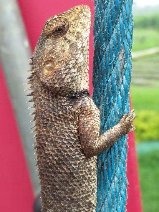 Animal, Nature, Color, Exotic, Portrait, Chameleon