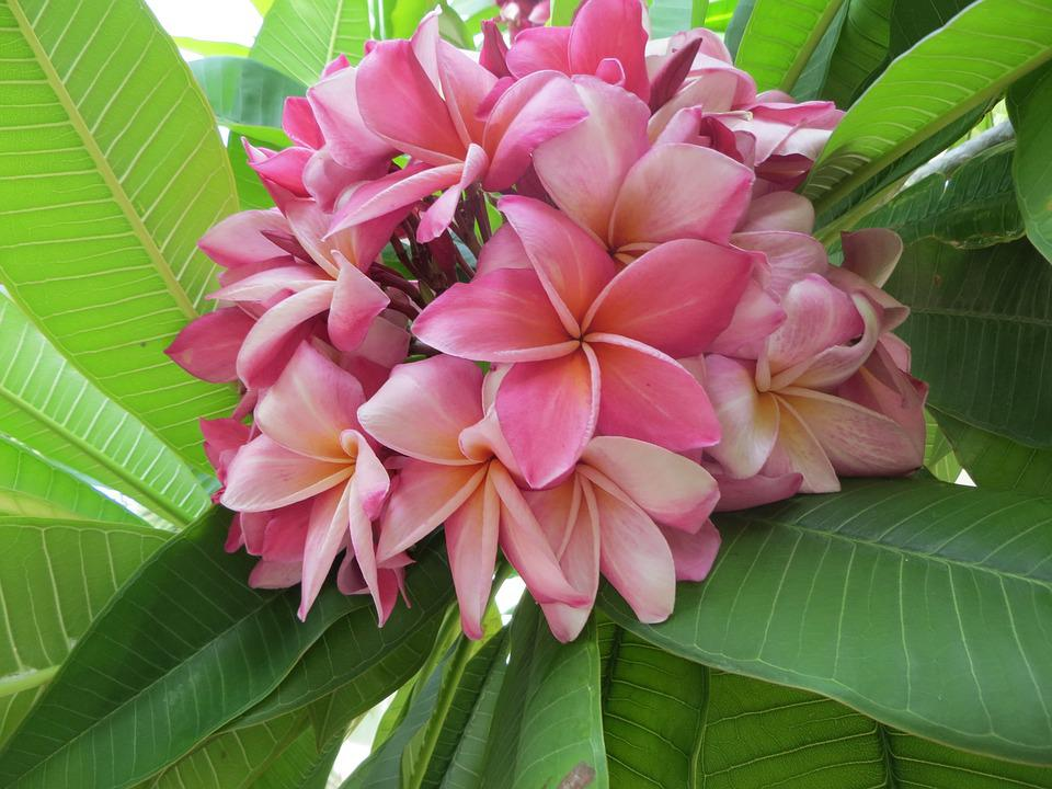 Flowers, Asia, Exotic Flower, Thailand