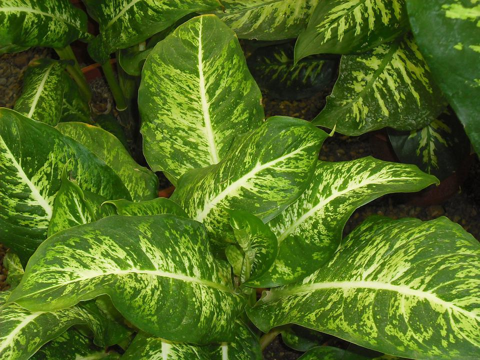 Plant, Garden, Exotic