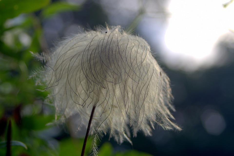 Flower, Unusual, Exotic, Pen, Disheveled, Gray, Gentle