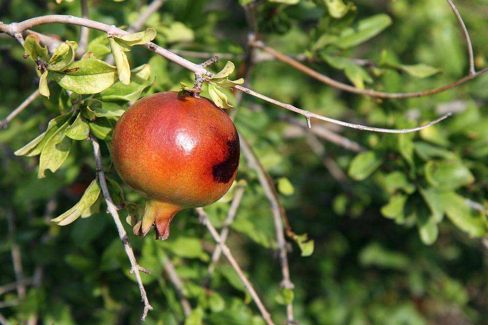 Antioxidant, Branch, Exotic, Food, Fresh, Fruit, Green