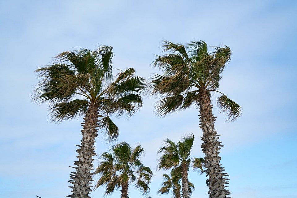 Palm, Tropical, Holiday, Exotic, Nature, Summer, Marine