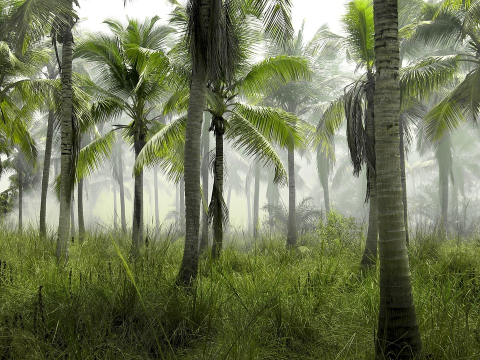 Palm Trees, Grass, Field, Nature, Tropical, Exotic