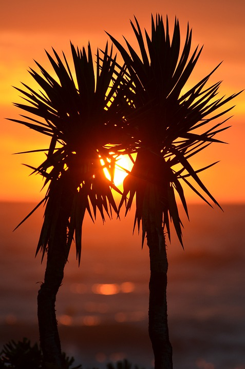 Palm Trees, Palms, Exotic, Sunset, Korfu, Ocean