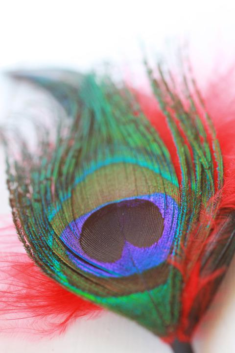 Feather, Colorful, Peacock, Green, Exotic, Color