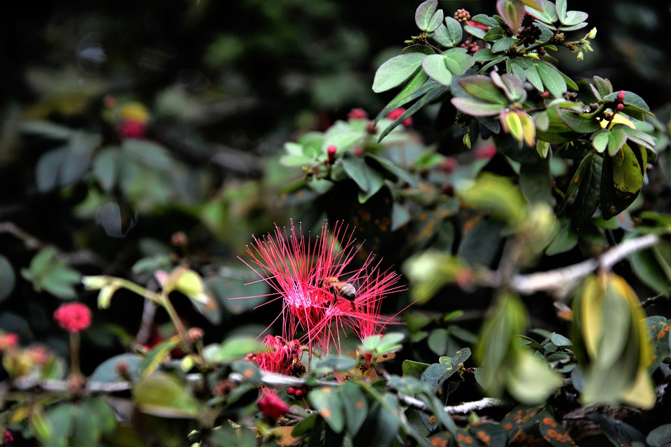 Flower, Tropical, Pink, Needles, Exotic, Spikes