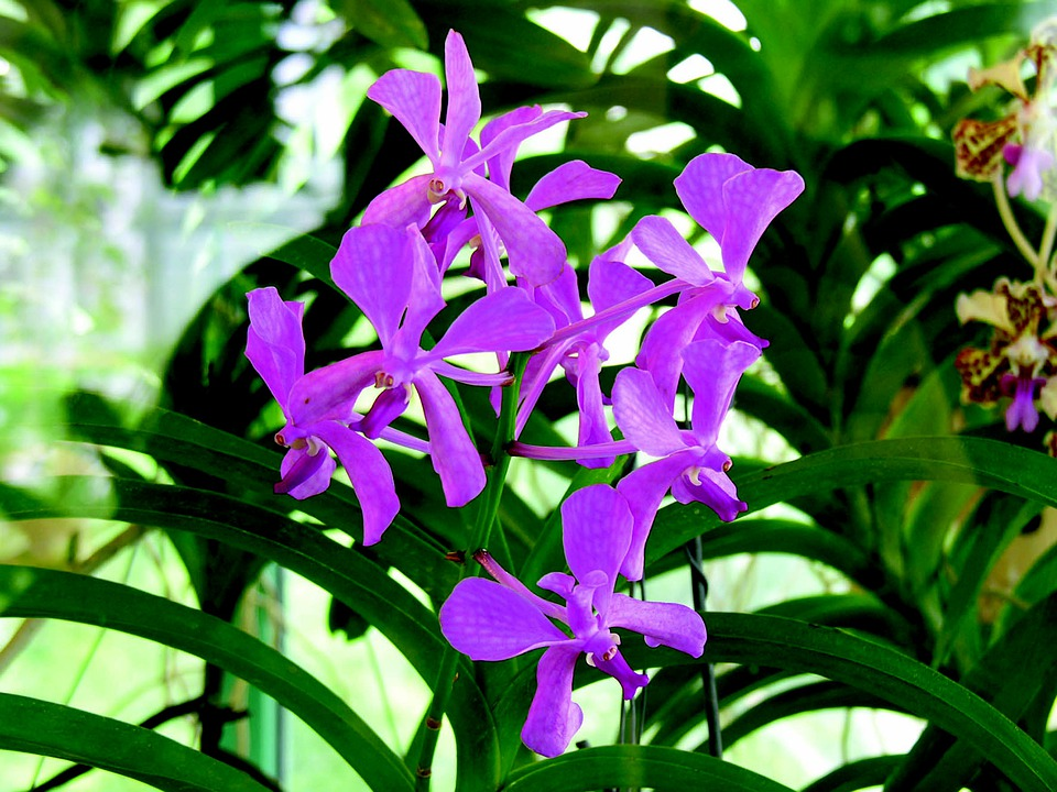 Flower, Exotica, Garden