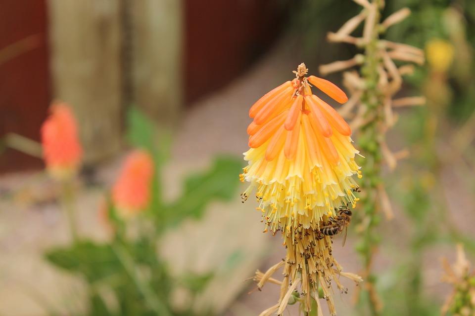 Plant, Yellow, Exotica, Nature, Macro, Plants, Flower
