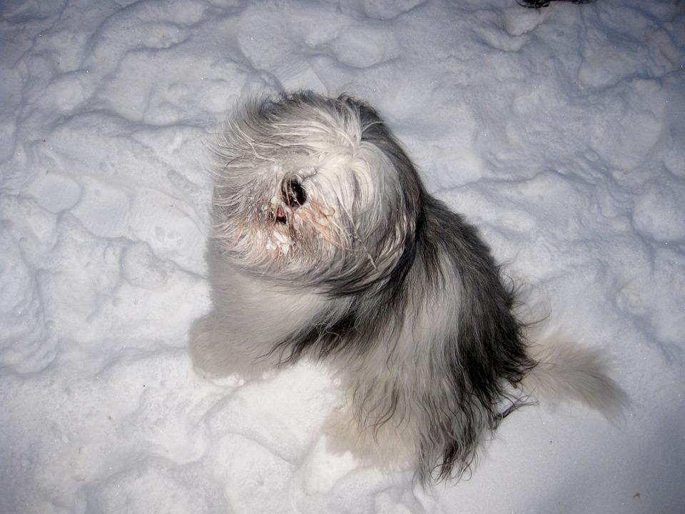 Dog, Play, Expectant Attitude, Snow, Winter