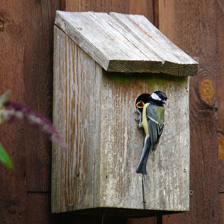 Titmouse, Bird, Natural, Expensive, Young Birds