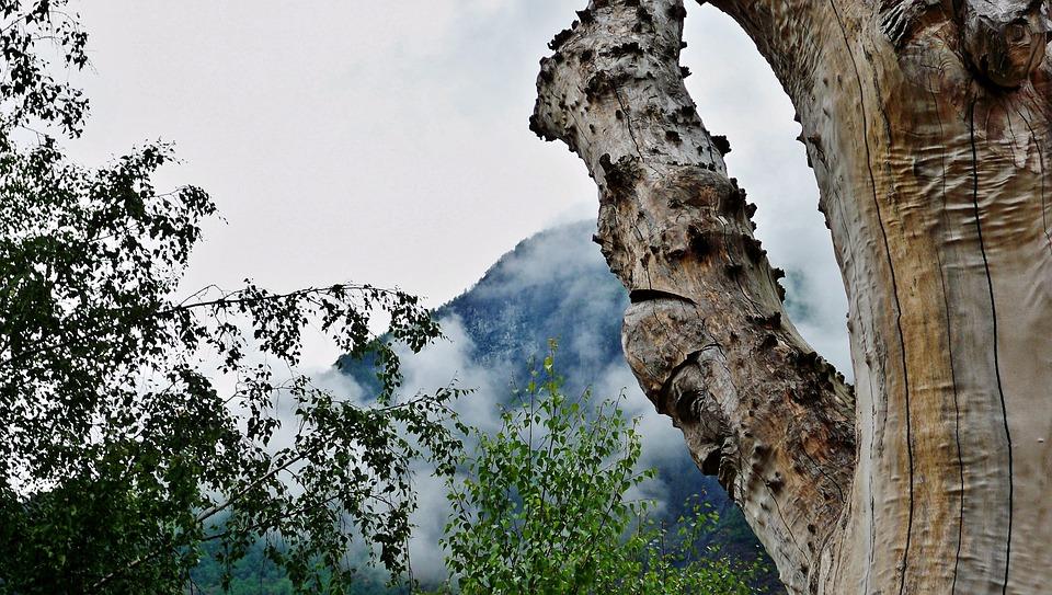 Nature, Fog, Outdoors, Travel, Exploration, Tree