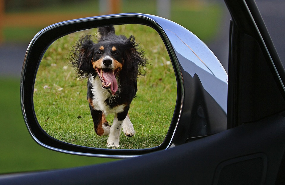 Dog, Expose, Drive Away, Animal Welfare