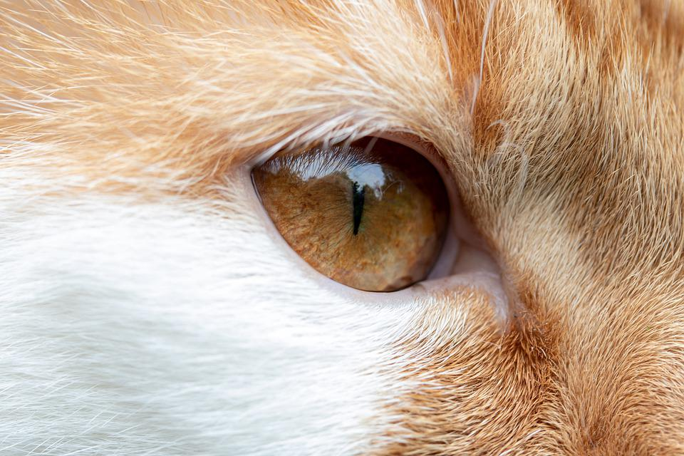 Cat, Eye, Cat's Eye, Face, View, Domestic Cat, Head
