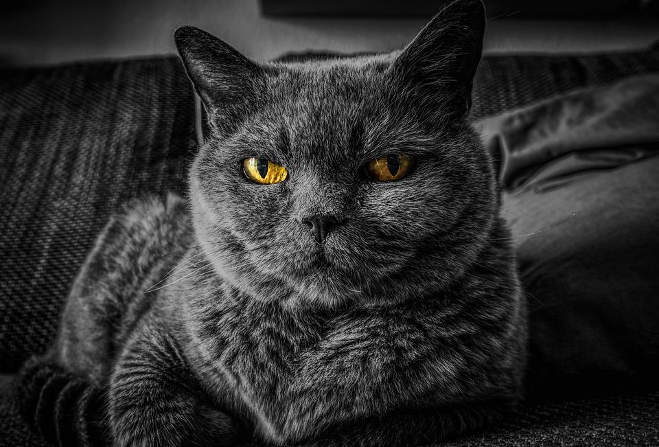 Cat, Cat's Eyes, Eye, Animal, Pet, Portrait, Relax