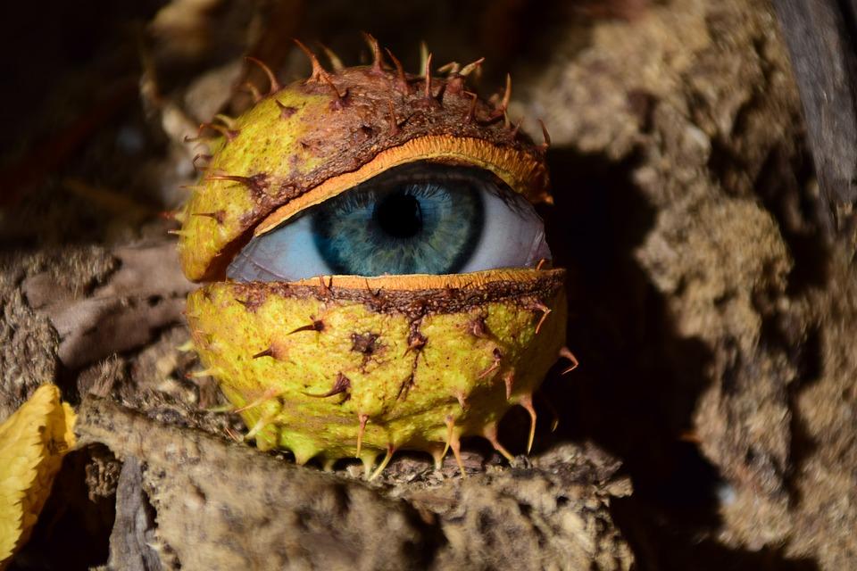 Eye, Chestnut, Surreal, Strange, Weird