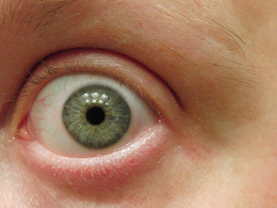 Eye, Macro, Face, Blue, Vision, Eyelash, Close, Eyebrow