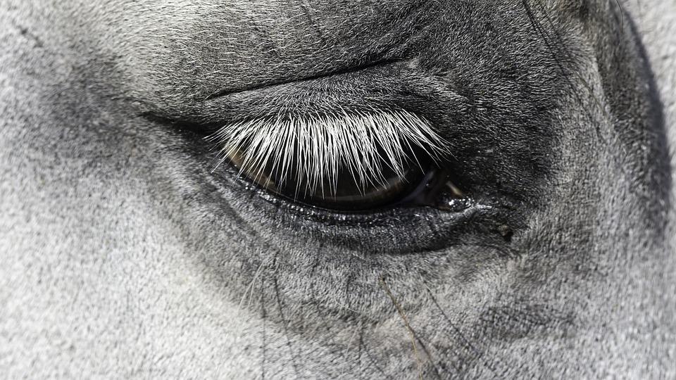Face, Portrait, Sight, Nature, Eyelash, Horse, Eye