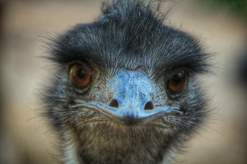 Bird, Eyes, Bill, Head, Plumage, Close Up, Blue