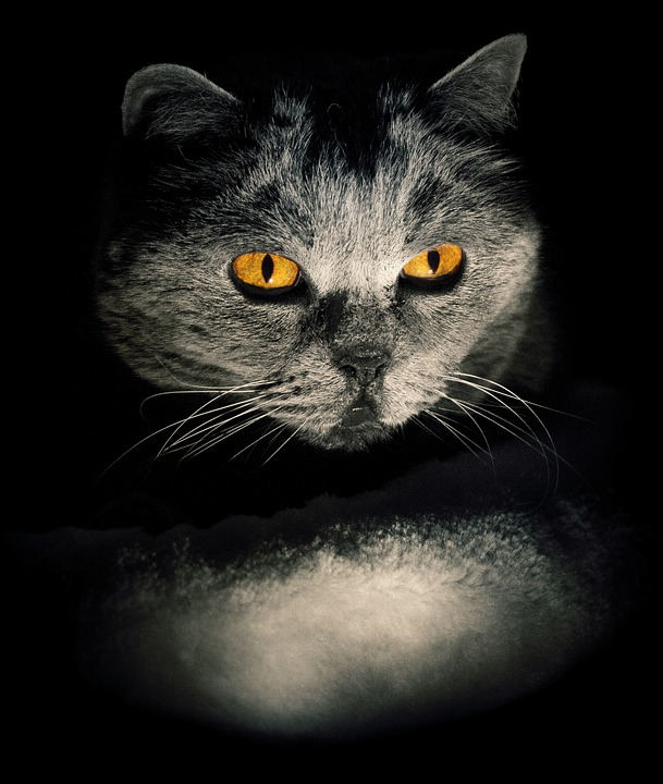 Cat, Darkness, Eyes, Weird, Lichtspiel, Background