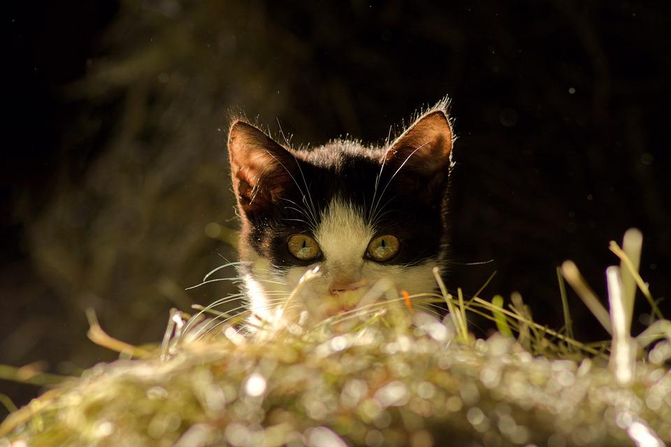 Cat, View, Pet, Cat Face, Eyes, Cat's Eyes
