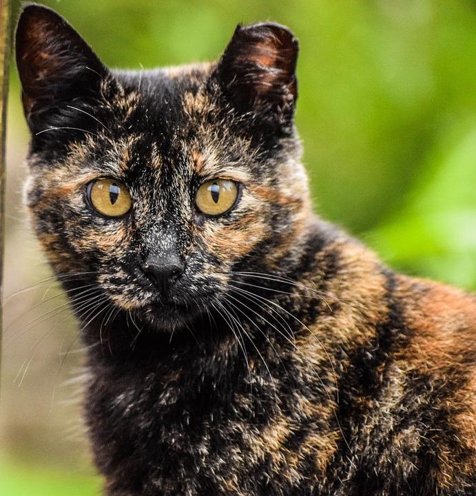 Eyes, Look, Cat