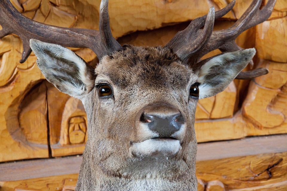 Animal, Big, Decoration, Deer, Eyes, Ears, Fur, Head