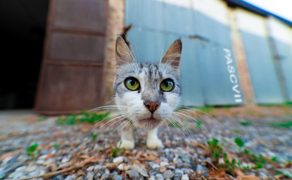 Eyes, Kitten, First Floor, Wide Angle, Green Eyes