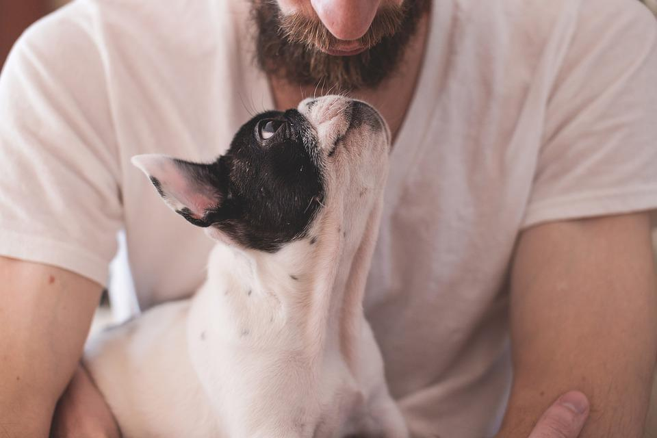 Animals, Dogs, Friendship, Pets, Eyes, Muzzle, Adorable
