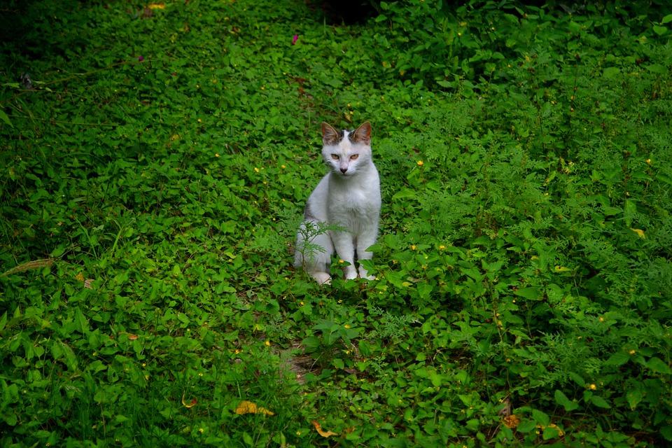 Cat, Green, Animals, Kitten, Pet, Pets, Eyes, Nature