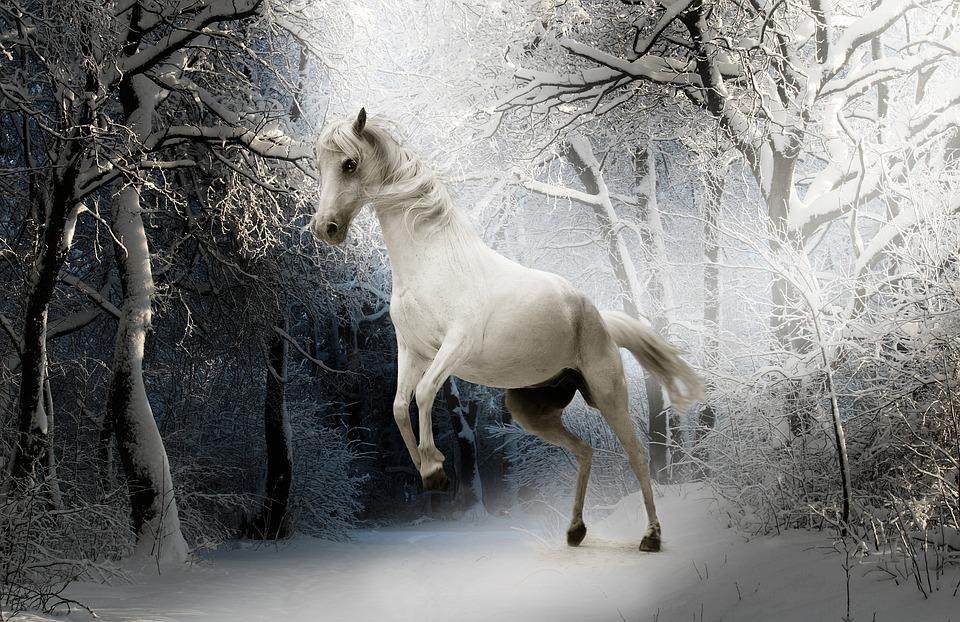 Animal, Horse, Nature, Mammal, White, Ride, Mare, Eyes