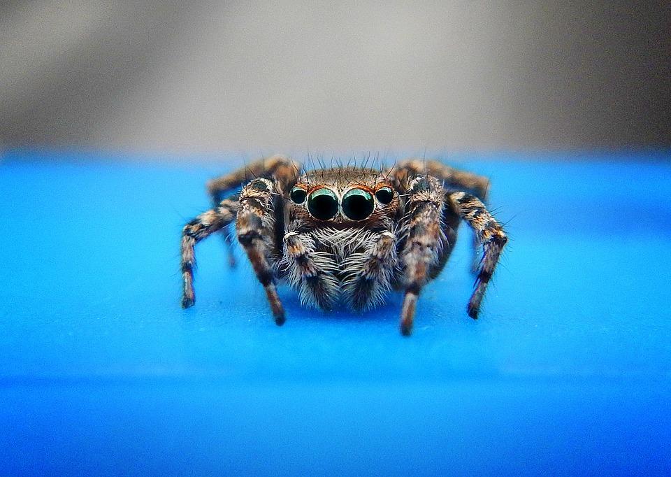 Spider, Arachnid, Tarantula, Web, Eyes, Look, Insects