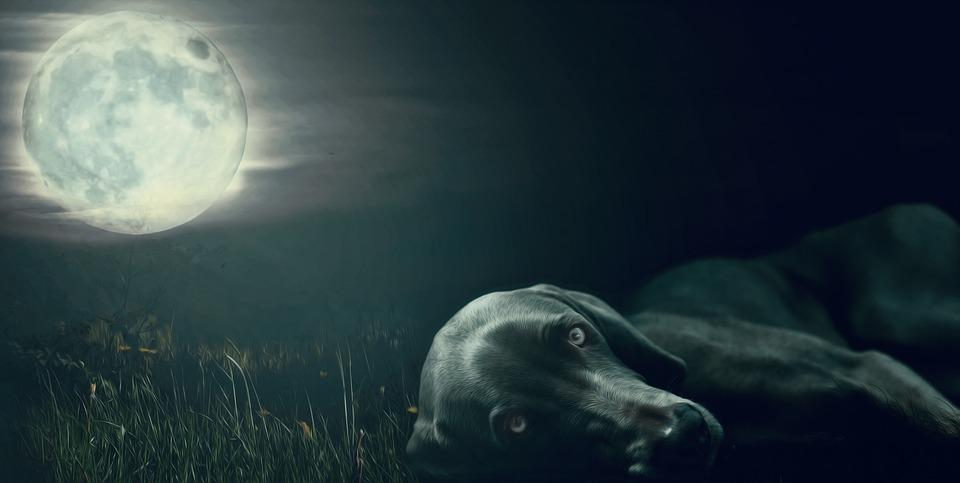 Dog, Moon, Moon Addicted, Eyes, Lying, Black, Night