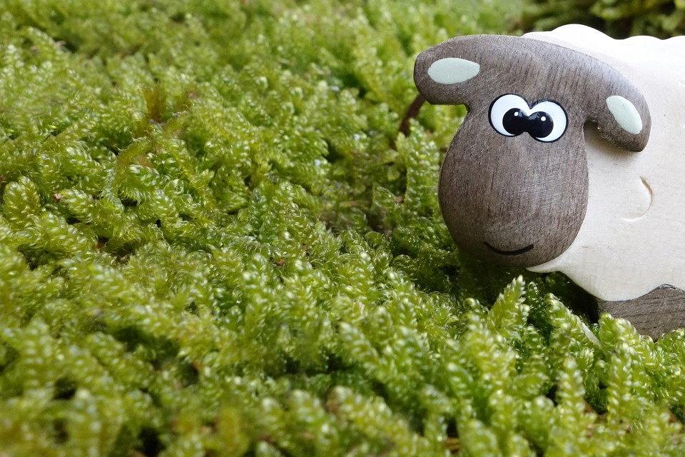 Sheep, Moss, Meadow, Eyes, Wood, Wooden Toys, Toys