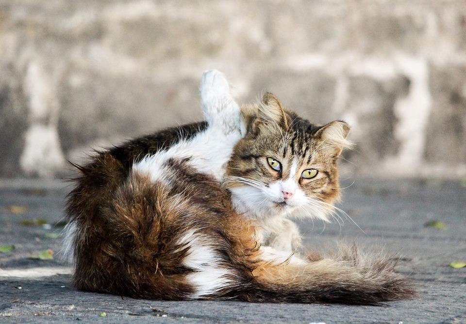 Cat, Eyes, Animal, View