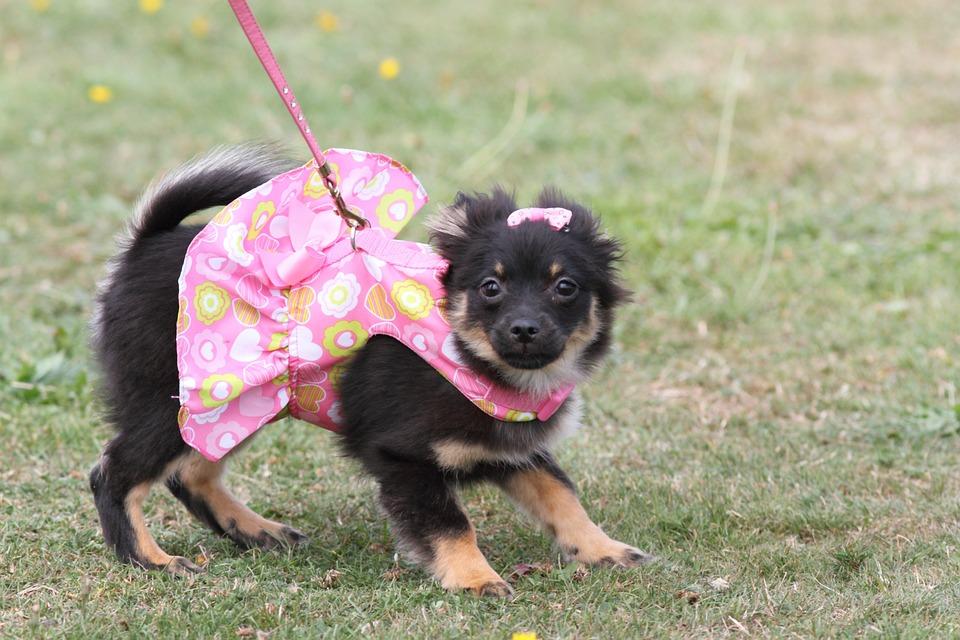 Animal, Cute, Dog, Doggie, Canine, Face, Fashion