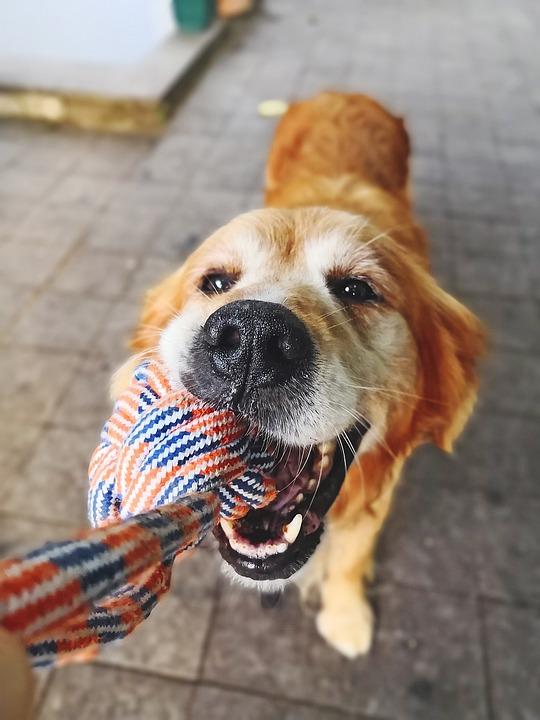 Dog, Animal, Cute, Sweet, Face, Pets, Friendship
