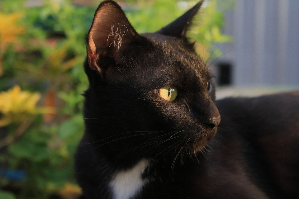 Cat, Eyes, Viewpoint, Face, Animals