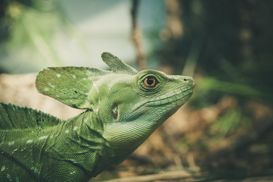 Lizard, Look, Close Up, Eye, View, Face, Pupil, Watch