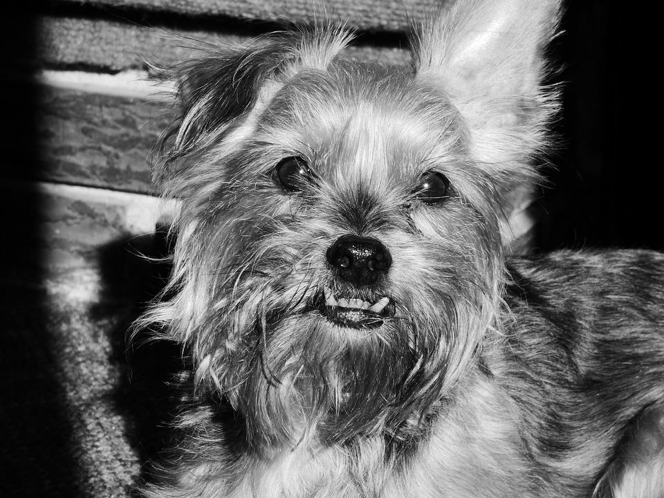 Dog, Teeth, Face, Pet, Animal, Canine, Happy, Cute