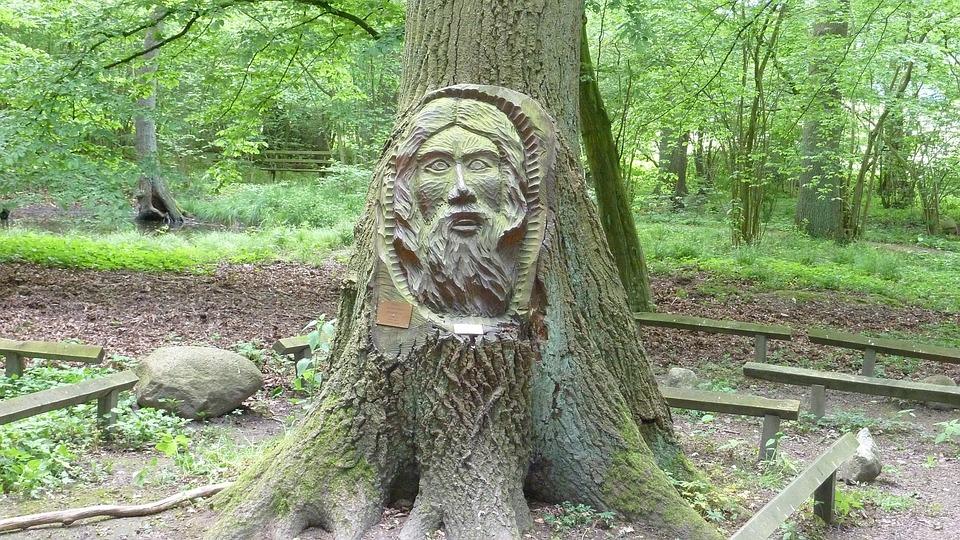 Face, Tree Face, Nature, Landscape, Tree, Log