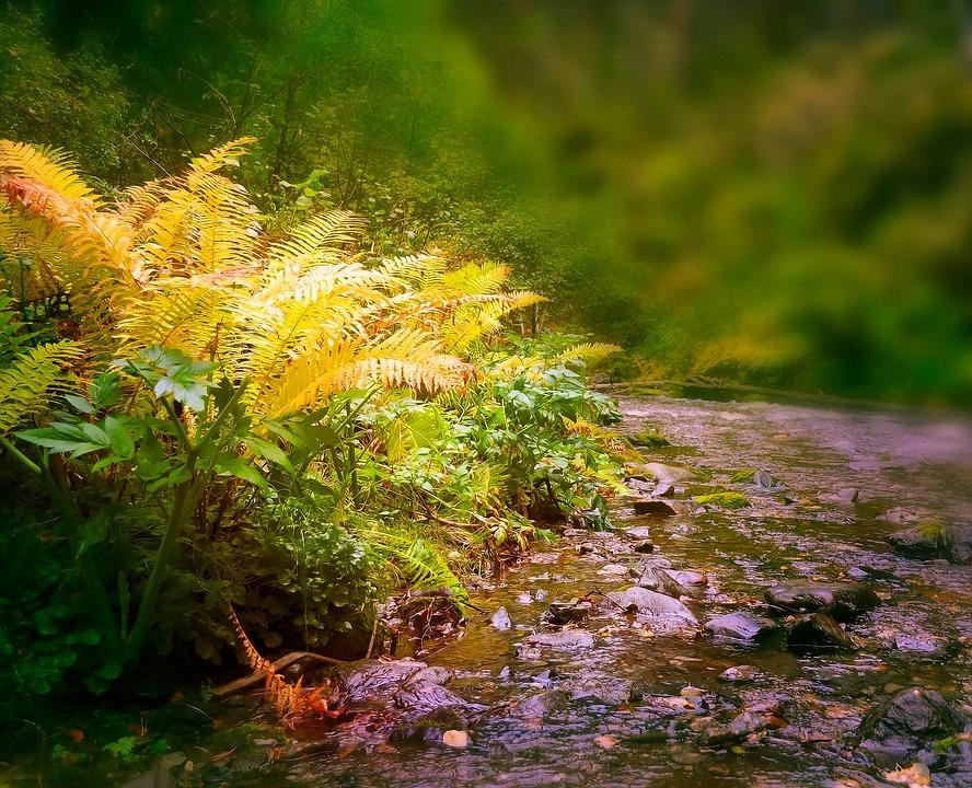 Fern, Plant, Autumn, Nature, Landscape, Fairy Tale