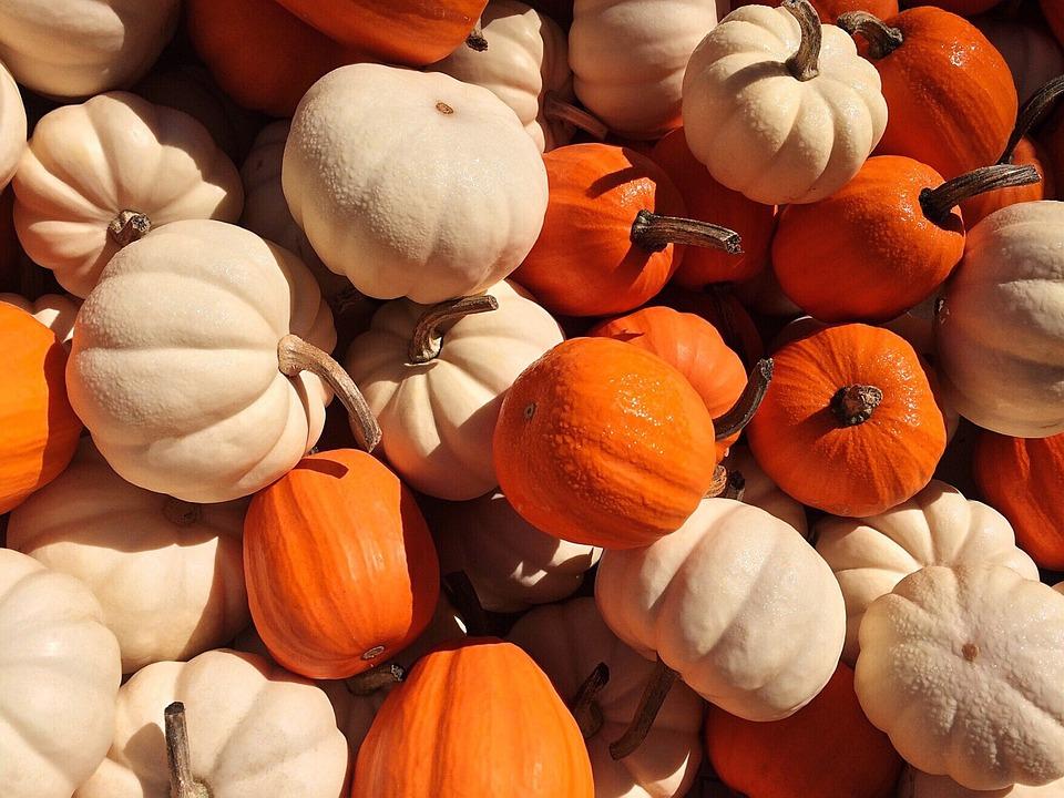 Pumpkins, Fall, Autumn, Orange, Halloween, Harvest