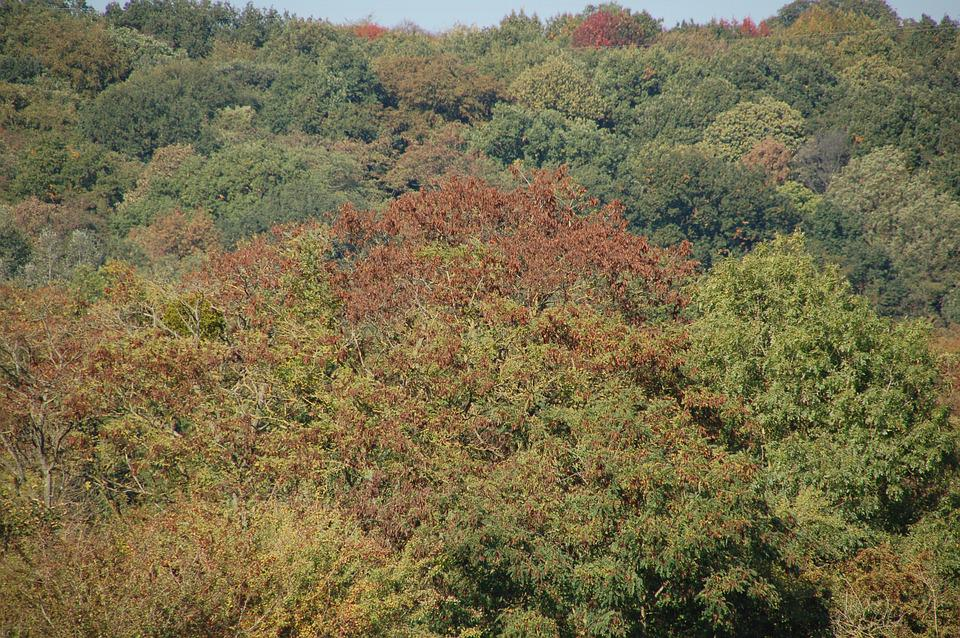 Fall, Trees, Forest, Nature, Autumn, Landscape, Leaves