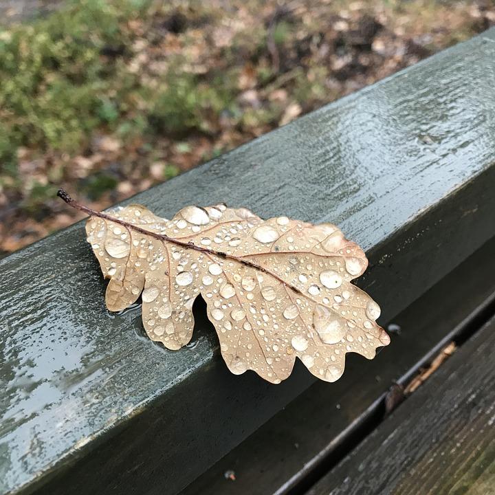 Oak, Leaf, Raindrop, Autumn, Fall