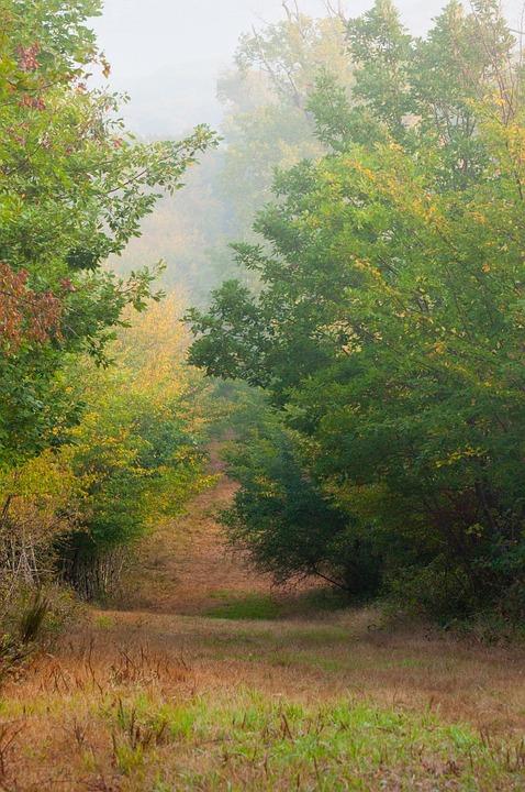 Fall, Landscape, Nature, Trees, Leaves, Autumn