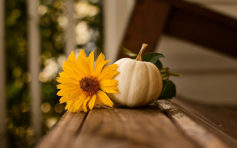 Thanksgiving, Pumpkin, Fall, Autumn, Nature, Background