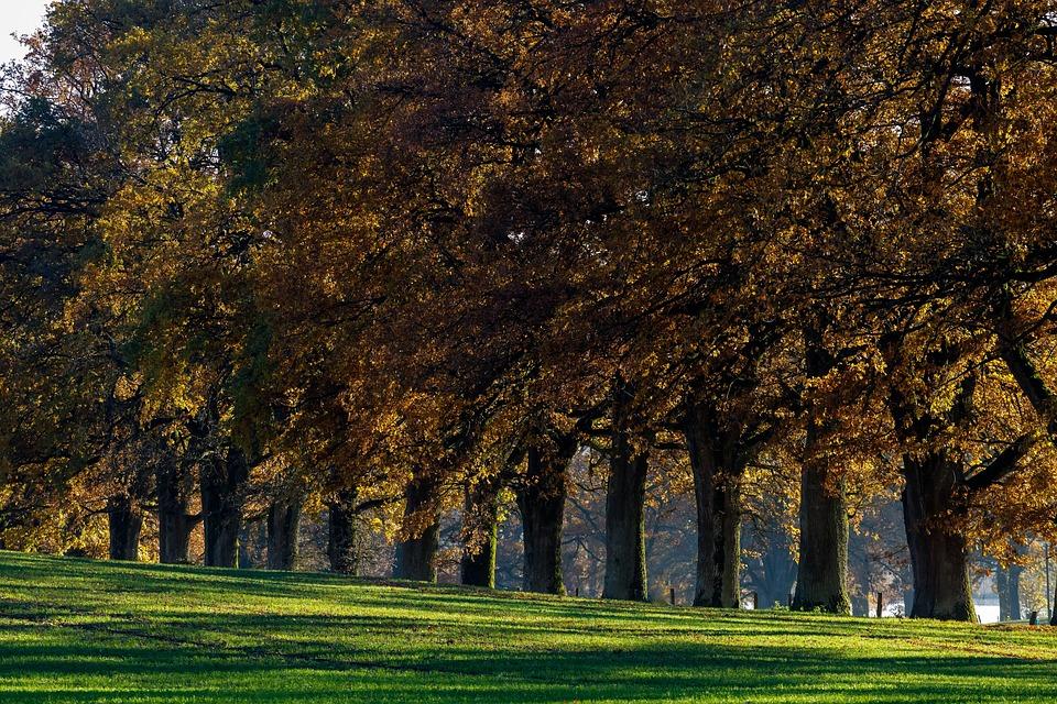 Tree Lined Avenue, Oak, Idyll, Beech Wood, Fall Color